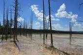 Yellowstone #4