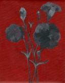 Flower Study II