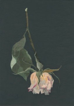 Still life Pink Rose