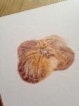 Bulb study
